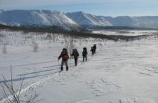 Туристические лыжи: особенности выбора