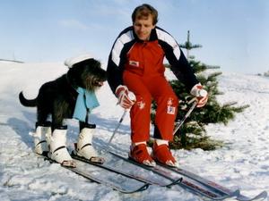 Собака на лыжах