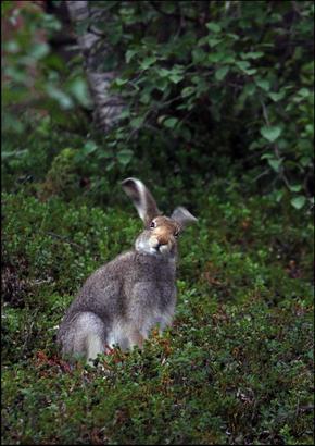 Национальный парк Сарек, животный мир