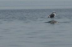 Чайки здесь хозяйки: на байдарке на остров в Ладожском озере и вокруг него