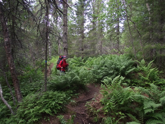 Ловозерские тундры - маршруты через папортники