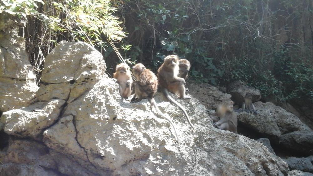 Мартышки развлекают туристов на островах Таиланда